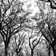 Central Park Nyc In Black And White Poster