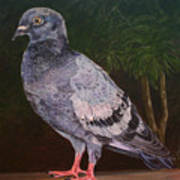 Central Park Visitor - Pigeon Poster
