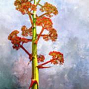 Century Plant Poster