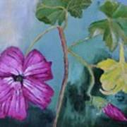 Channel Islands' Island Mallow Poster
