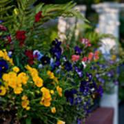 Charleston Flower Boxes Poster