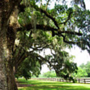 Charleston Oaks 5 Poster