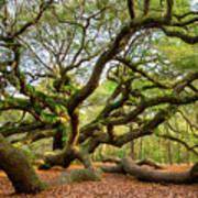 Charleston Sc Angel Oak Tree South Carolina Landscape Poster