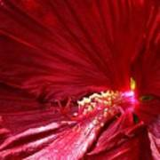 Charlotte Beach Red Hibiscus Poster