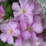 Charming Clematis Poster