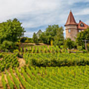Chateau In A Vineyard Poster