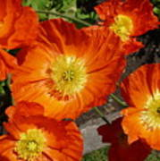 Cheerful Orange Flowers  Poster