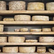 Cheese Wheels On Wooden Shelves In The Cheese Store Poster