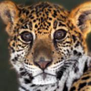Cheetah Poster by Craig Incardone