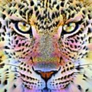 Cheetah Vi Poster