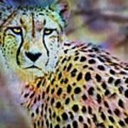 Cheetah Viii Poster