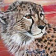 Blaa Kattproduksjoner       Cheetahs Face Poster