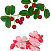 Cherries And Cherry Blossoms Poster