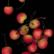 Cherries Multiplied Poster