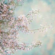 Cherry Blossom Dreams Poster