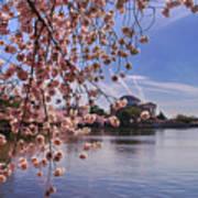 Cherry Blossom Over Tidal Basin Poster