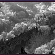 Cherry Blossom Season In Japan Mountain Hills Trees Photography By Navinjoshi At Fineartamerica.com  Poster