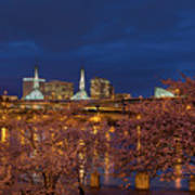 Cherry Blossom Trees At Portland Waterfront During Blue Hour Poster