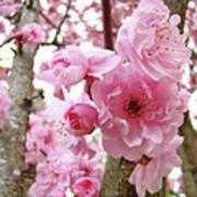Cherry Blossoms Art Prints 12 Cherry Tree Blossoms Artwork Nature Art Spring Poster