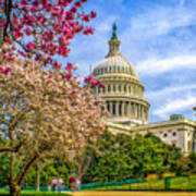 Cherry Blossoms At The Capitol Poster