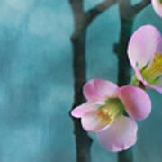 Cherry Blossom Bokeh Poster