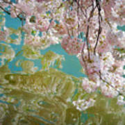 Cherry Blossoms Close Up Six Poster
