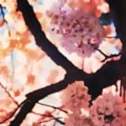 Cherry Blossoms In Washington D.c. Poster