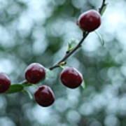 Cherry Constellation  Poster