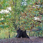 Chestnut Tree In Autumn Poster
