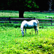 Chestnut Hill Horse Poster
