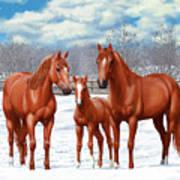 Chestnut Horses In Winter Pasture Poster