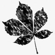 Chestnut Leaf Poster