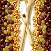 Chestnuts Grapes Wallnuts Poster