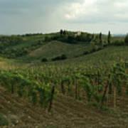 Chianti Vineyards In Tuscany Poster