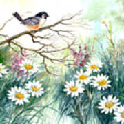 Chickadee And Daisies Poster