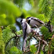 Chickadee Feeding Time Poster