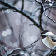 Chickadee Rain Poster