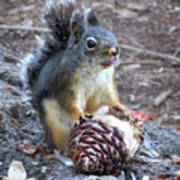 Chickaree Stripping A Pine Cone - John Muir Trail Poster