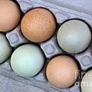 Chicken Eggs In Carton Poster