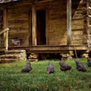 Chickens - Log House - Farm Poster