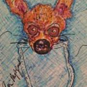 Chihuahua In A Pocket Poster