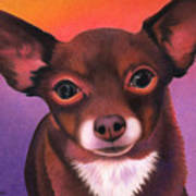 Chihuahua - Johnny Poster