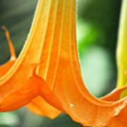Children's Garden Angel's Trumpet Poster