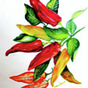 Chillies From My Garden Poster by Karin  Dawn Kelshall- Best
