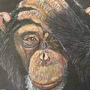 Chimp Poster