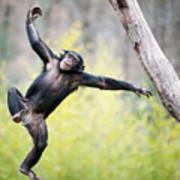 Chimp In Flight Poster