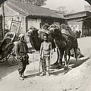 China: Peking, 1901 Poster