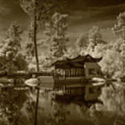 Chinese Botanical Garden In California With Koi Fish In Sepia Tone Poster