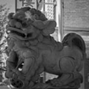 Chinese Guardian Female Lion B W Poster