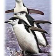 Chinstrap Penguins 1 Poster
